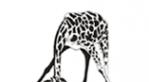 Логотип компании Всё ТВ
